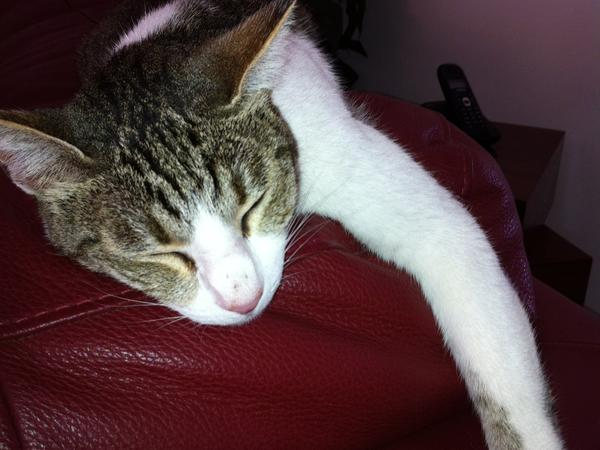 Pet sitter required for our lovely cat and  dog