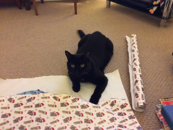 Pet sitter needed for my cat for 8 days near Bath/Bristol
