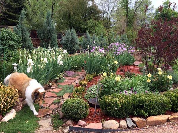 House sitting in a lovely Arts and Crafts home in NW Denver, Colorado, USA