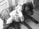 Housesitting assignment in Southampton, United Kingdom - Image 2