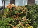 Housesitting assignment in Guisborough, United Kingdom - Image 4
