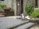 Housesitting assignment in Hebden Bridge, United Kingdom - Image 3